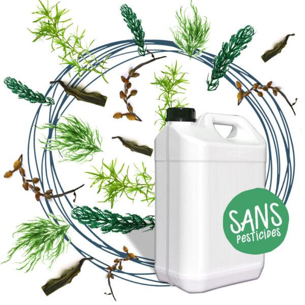 Macérations naturelles à base de plantes bio